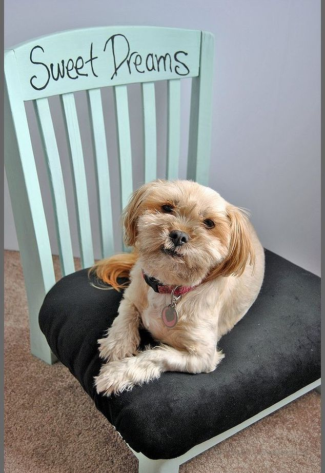 Upholstered Chair Bed for Small Dogs